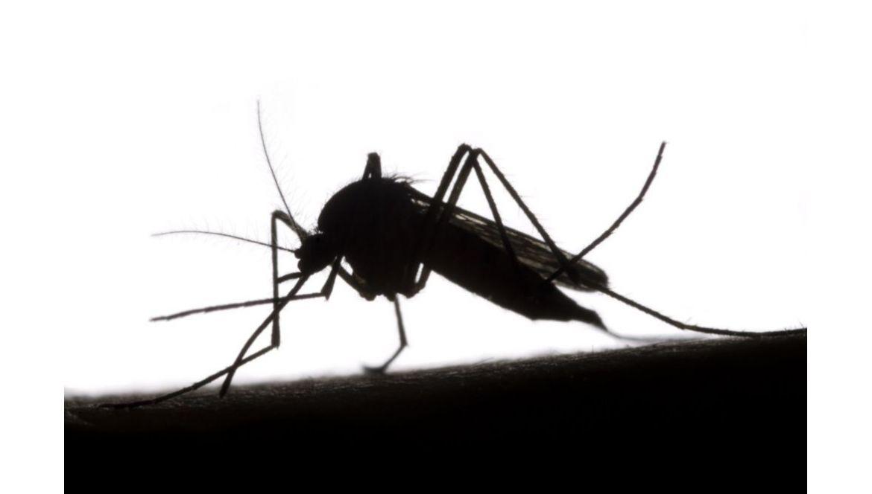 Jaki olejek na odstraszanie owadów?