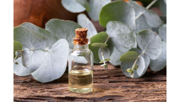Jakie właściwości posiada olejek eukaliptusowy?